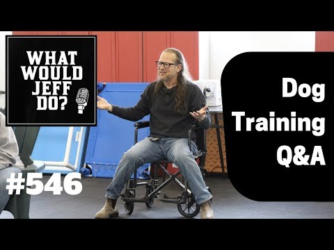 dogs-and-separation-anxiety-|-stop-dog-barking-|-what-would-jeff-do?-dog-training-q-&-a-#546