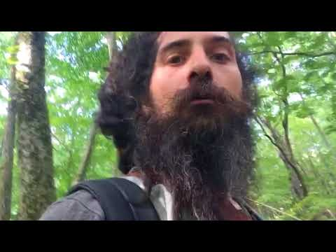 Foragers Broadcast Ep. 46 - Foraging Chanterelles and Radical Ideas for Ecosystem Management