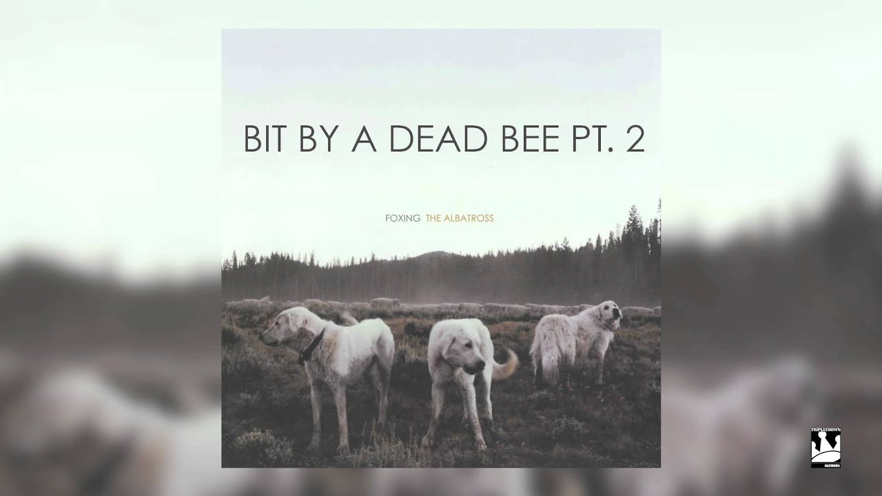 foxing-bit-by-a-dead-bee-pt-2-audio-triplecrownrecords