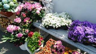 Садовый центр #1 Комнатные растения. Садовый мир. Экспоцентр Нивки.(Посетили Садовый центр. Выбирали растения и горшки., 2016-05-05T05:39:51.000Z)