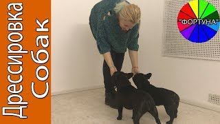 Начальное Обучение Собаки. Установка Контакта с Собакой