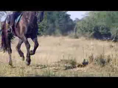 horse riding in tanzania,singita,faru faru and mobile tented camp.