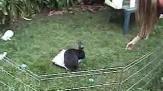 Amazing bunny tricks