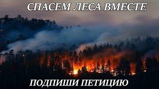 Требуем ввести режим ЧС на всей территории Сибири по лесным пожарам!/Anyuta Yar