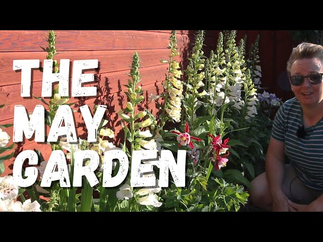 A garden update For May