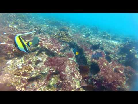 CABO PULMO SCUBA DIVE - MY TRIP TO BAJA MEXICO, SEA OF CORTEZ