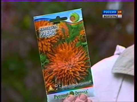 видео: Подзимние посевы. Цветущие газоны. Морковь,укроп,петрушка,салаты,цветы.