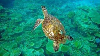 Pesci e fondale delle Maldive