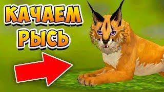 ЖДЕМ ОБНОВЛЕНИЕ и КАЧАЕМ УРОВЕНЬ у РЫСИ в WildCraft Симулятор животных