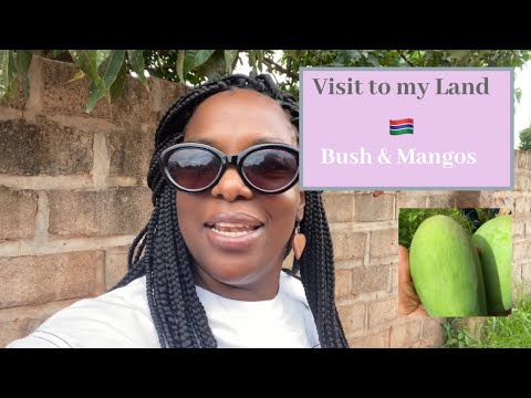 Visited my Land in Gambia & Showing you more Land Options
