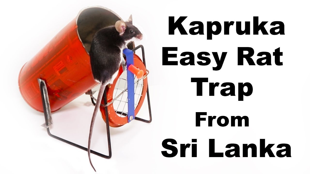 kapruka-easy-rat-trap-from-sri-lanka-made-from-recycled-garbage-mousetrap-monday