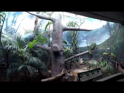 Lincoln Park Zoo 02 18 2017 McCormick Bird House