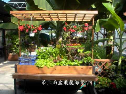 Urban Aquaponics Garden YouTube