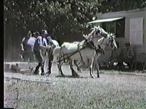Conquerall Mills Horse, Ox & Pony Pull 1999 part 2 -New Ross Fair Ox Pull 1999