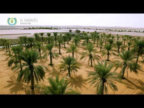 Mawasim organic farm in Abu Dhabi.
