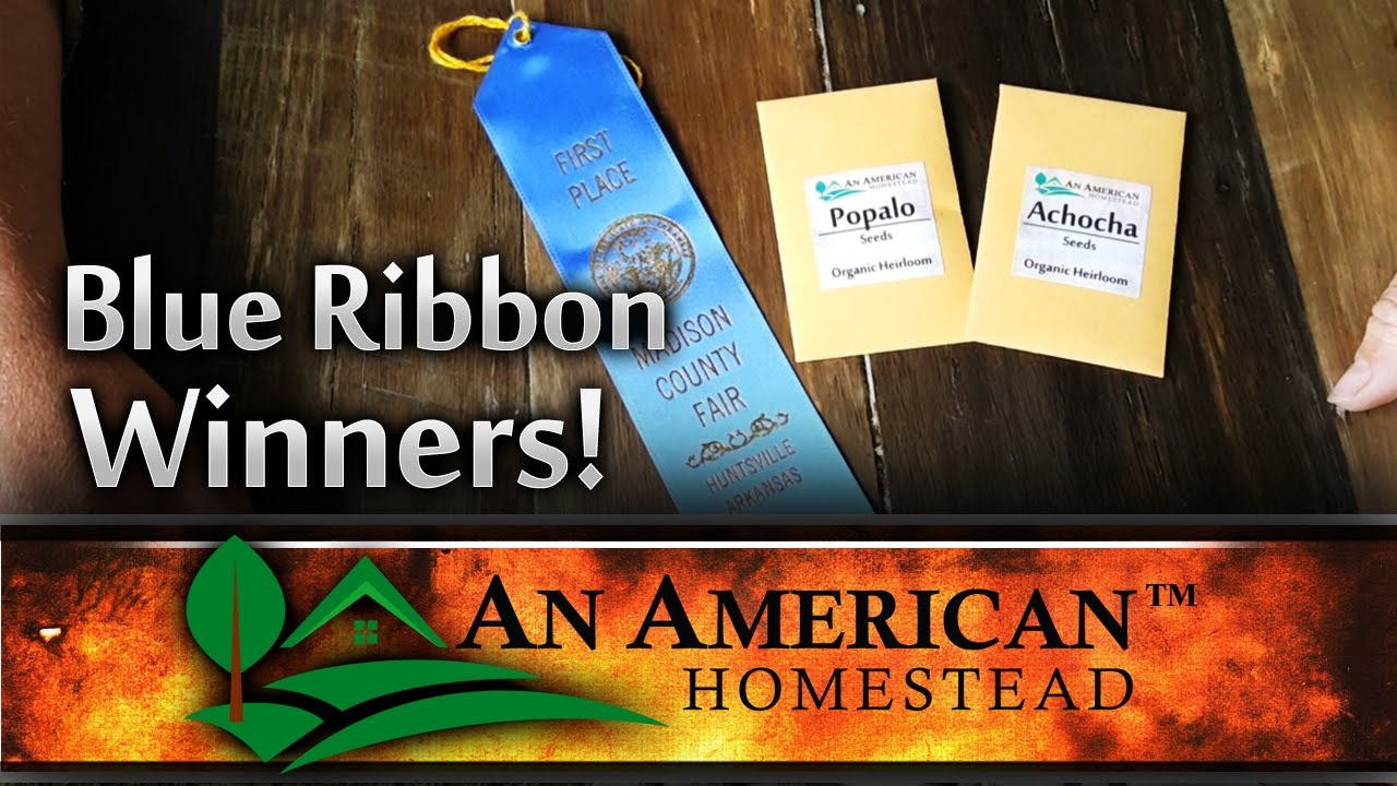 Winning Blue Ribbons For Your County Fair