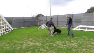 Military Working Dog Bite Training