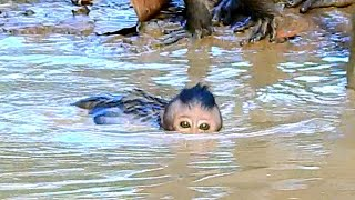 Unbelievable ! Poor baby Jinx learning to swimming in mud water till get stuck almost can't breath