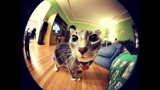 Универсальный объектив для смартфонов Клип Ленс (Clip Lens). Наравне с профессионалами.(, 2017-02-19T11:46:16.000Z)