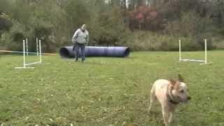 Dog Training Using Recaller Games Is Brilliant!