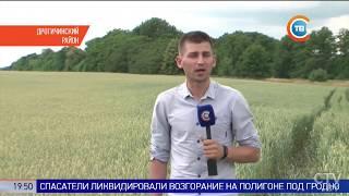 Из-за засухи придётся пересеять более 26 тыс. гектаров зерновых в Брестской области