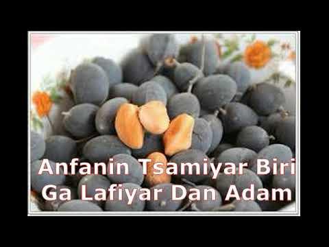 Download Anfanin Tsamiyar Biri Ga Lafiyar Mutum?