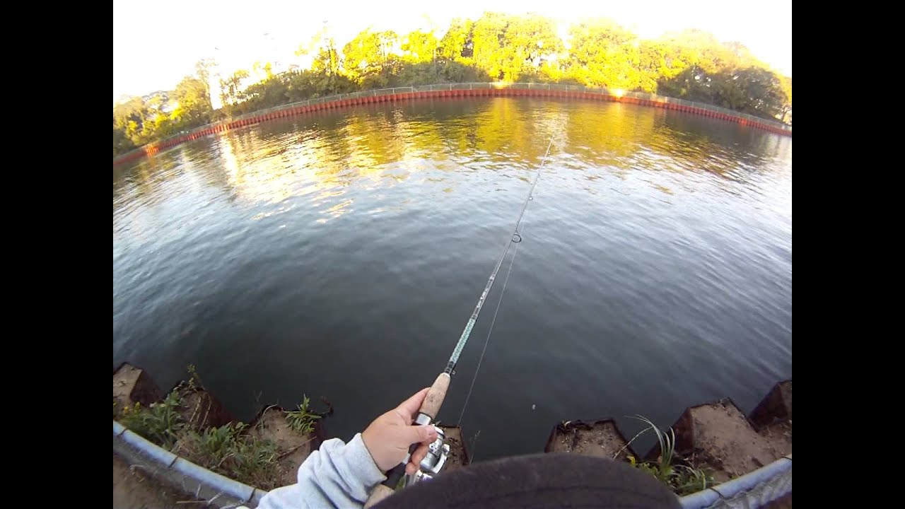 A 39 lil morning black fish and seabass at point pleasant for Point pleasant fishing report