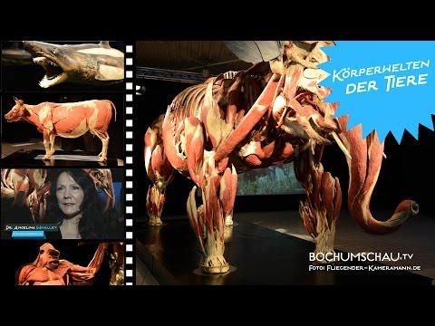 Körperwelten der Tiere Bochum 2014