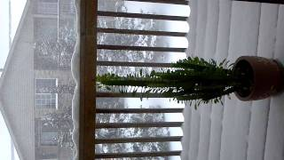Wild Snow Cactus Documentary (Original)
