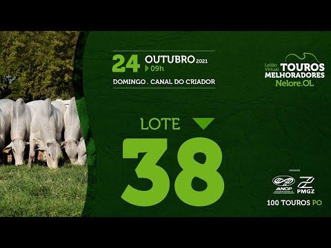 LOTE 38 - LEILÃO VIRTUAL DE TOUROS MELHORADORES  - NELORE OL - PO 2021