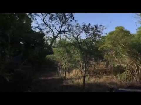 South Africa Day 10 - Mavela safari in Zululand day 2