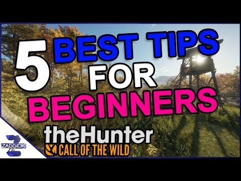 Top 5 Best Tips for Beginners TheHunter Call of the Wild