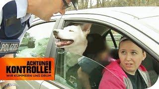 Ignorante Hundebesitzerin: Keine Einsicht bei Polizeikontrolle! | Achtung Kontrolle | kabel eins