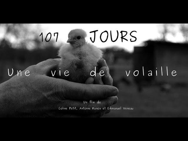 107 jours, une vie de volaille