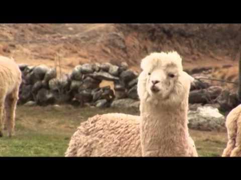 Cusco: Metodología Pachamama