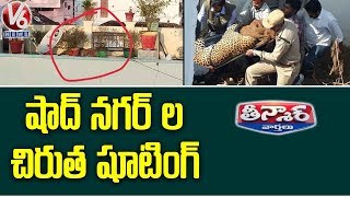 Leopard Found Sleeping On Terrace Of  Shadnagar House | Teenmaar News  Telugu News