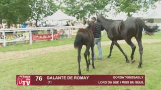 The Chaser Day Paray   2016   Lot 76 : Galante de Romay