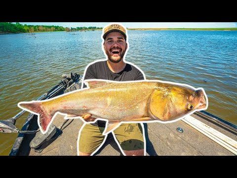 Giant River FLYING ASIAN CARP Catch Clean Cook!!! (World's Stinkiest Fish)
