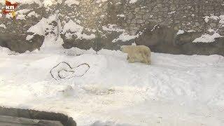 Привет, медвед сердцеед!
