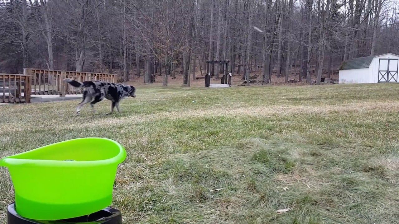 Godoggo G4 Dog Fetch Machine Testing Youtube