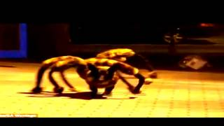 Mutan Giant Spider Dog (New)