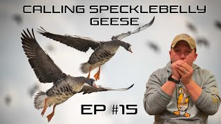 Calling Specklebelly Geese - EP #15 Field Facts with Forrest