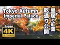 [4K]TOKYO JAPAN 東京・皇居•乾通りの紅葉 The Autumn leaves of the Imperial Palace 東京観光 日本の紅葉  ディスカバーニッポン