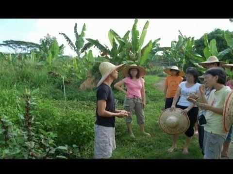 GK Organic Farm, Bangi