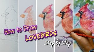 How to Draw Lovebirds/ Angry Birds Step by Step/ Use Watercolour Pencils