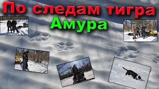 Снегоход Stels S800 Росомаха идет по следам амурского тигра(Снегоход Stels S800 Росомаха идет по следам амурского тигра. Дело было на зимней подледной рыбалке, на утро вокр..., 2016-03-14T14:43:47.000Z)