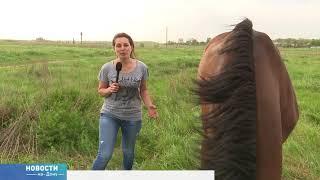 Казак-китаец приехал на Дон верхом на коне