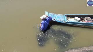 Nghe quậy rầm rầm cạnh chuồng heo thanh niên đem xiệc ra chích thử../catch fish in vietnam