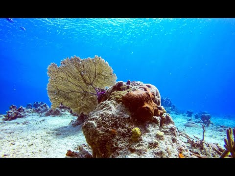 Discover Scuba Diving in Cozumel