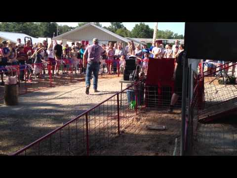 Hogway Speedway @ Putnam County Fair